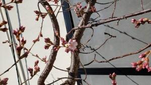 高遠にも春が